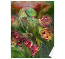 Parrot In Parrot Tulips Poster