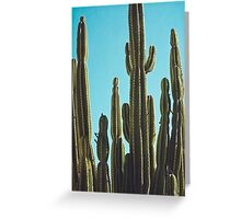 At the Cactus Garden Greeting Card