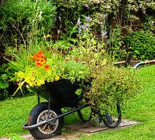 Decorative use for an old wheelbarrow by missmoneypenny