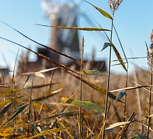 Wheat and Windmill by TomGreenPhotos
