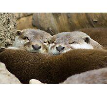 Sleepy Otters Photographic Print