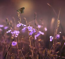 Butterfly in the Nature by Sven  Herkenrath