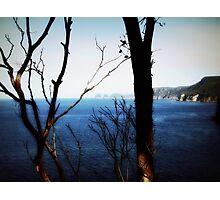 Ocean Glimpses Through the Trees Photographic Print