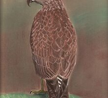 Buzzard by MagsWilliamson