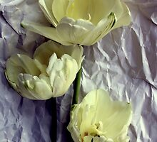 Paper Whites...Tulips, That Is by Michael May