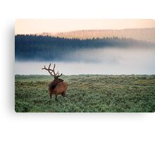 Early Morning Bull Elk Canvas Print