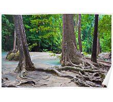 Jungle Stream in Thailand Poster