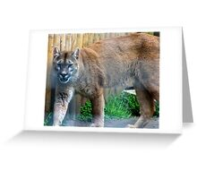 Cool cougar Greeting Card
