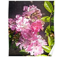 Pink Roses, tee, i-phone case, i-pad case, pillow and tote Poster