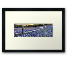 Texas Bluebonnets along a Woodrail Fence Panorama Framed Print