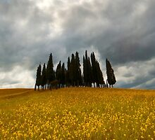 Cypresses by JBlaminsky