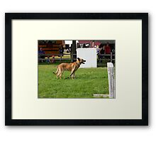 police dog Framed Print