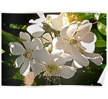 Wild white roses tee, i-phone case, i-pad case, pillow and tote Poster
