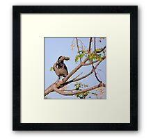 Hooded crow (Corvus cornix) with a mouse Framed Print