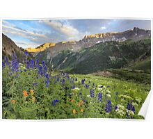 Colorado Wildflower Images - Yankee Boy Basin Summer 2 Poster