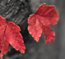 Tiny Maple Leaves Sticker