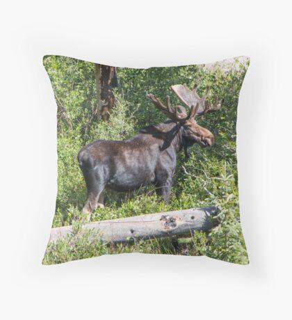 RMNP Bull Moose Throw Pillow