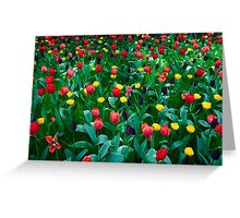 Tulips @ Keukenhof Greeting Card