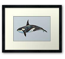 Orca on blue Framed Print