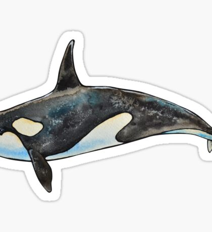 Orca on blue Sticker