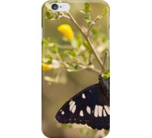 Southern White Admiral butterfly (Limenitis reducta).  iPhone Case/Skin
