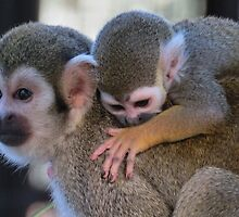 Squirrel monkey mom by Linda Sparks