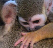 Squirrel monkey mom Sticker