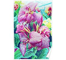 Canna Lily with Water Drops Poster