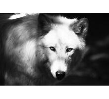 Ghost Wolf Photographic Print