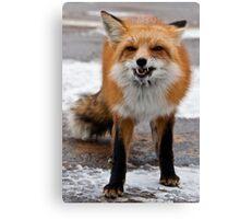 Goofy Fox Canvas Print