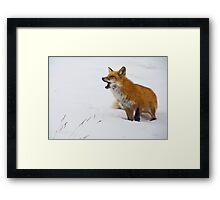 Goofy Fox 2 Framed Print