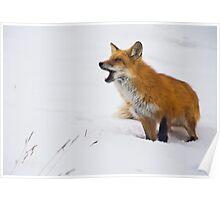 Goofy Fox 2 Poster