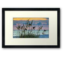 Foraging at Sunset Framed Print