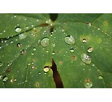 Water Droplets Photographic Print