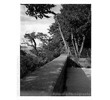 The Last Polaroid Photograph Photographic Print