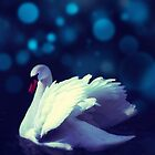Swan by subhraj1t
