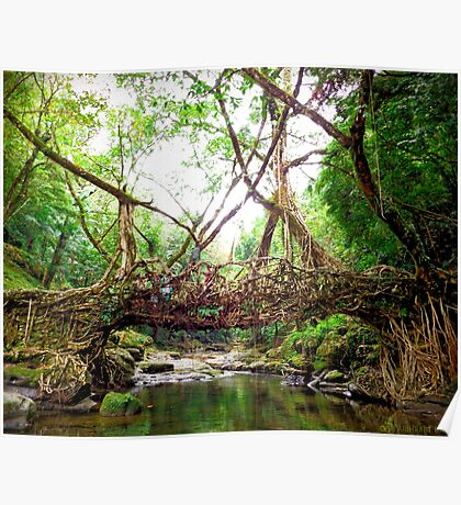 Bridge created by nature Poster