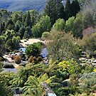 Mount Tomah Botanic Gardens by SharronS
