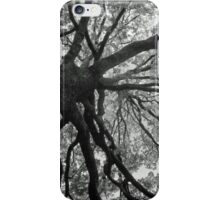 Up an Oak tree iPhone Case/Skin