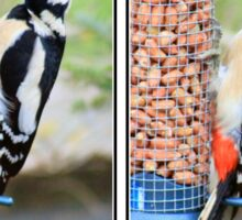 Great spotted woodpecker collage Sticker