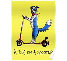 A Dog on a Scooter Poster