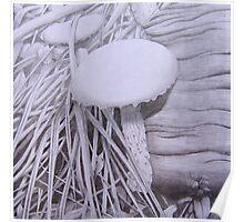 Mushroom, Toadlet Habitat Poster