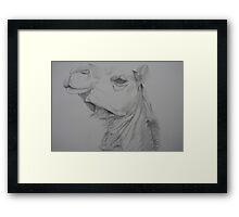 Smug Camel Framed Print