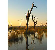 Sculptures in the Swamp Photographic Print
