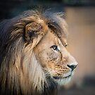 King by Craig Hender