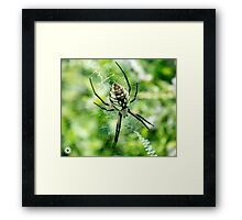 Mother's Web Framed Print