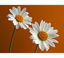 Daisies on orange Photographic Print