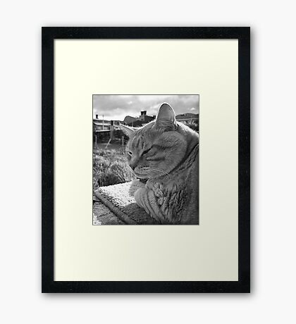 Senior Cat Framed Print