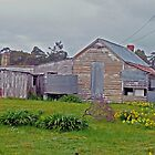 Old farmhouse, Tasmania by Margaret  Hyde