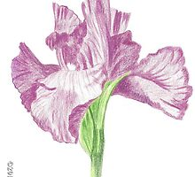 Thank You Card - Original Drawing - Flower by VivianRay